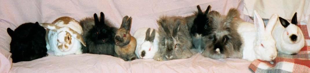 [ The bunnies, Yuletide 2001 ]