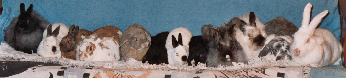 [ The bunnies, Yuletide 2003 ]