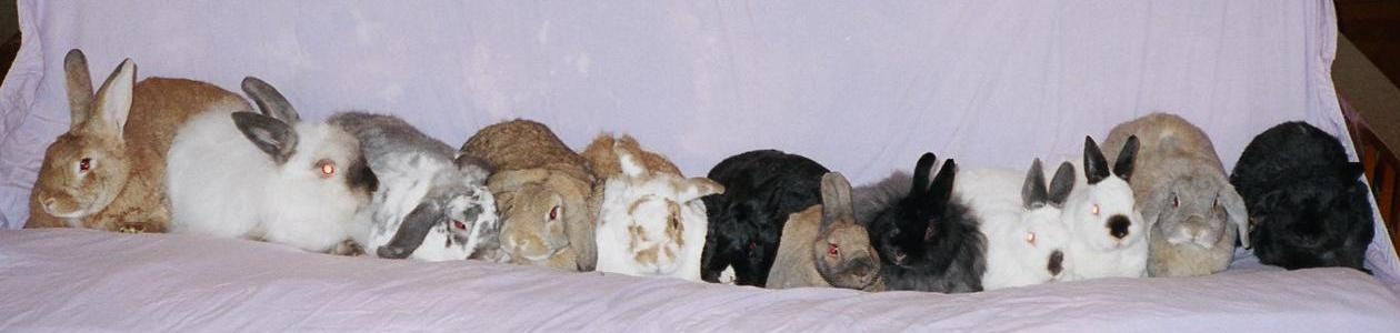 [ The bunnies, Yuletide 2004 ]