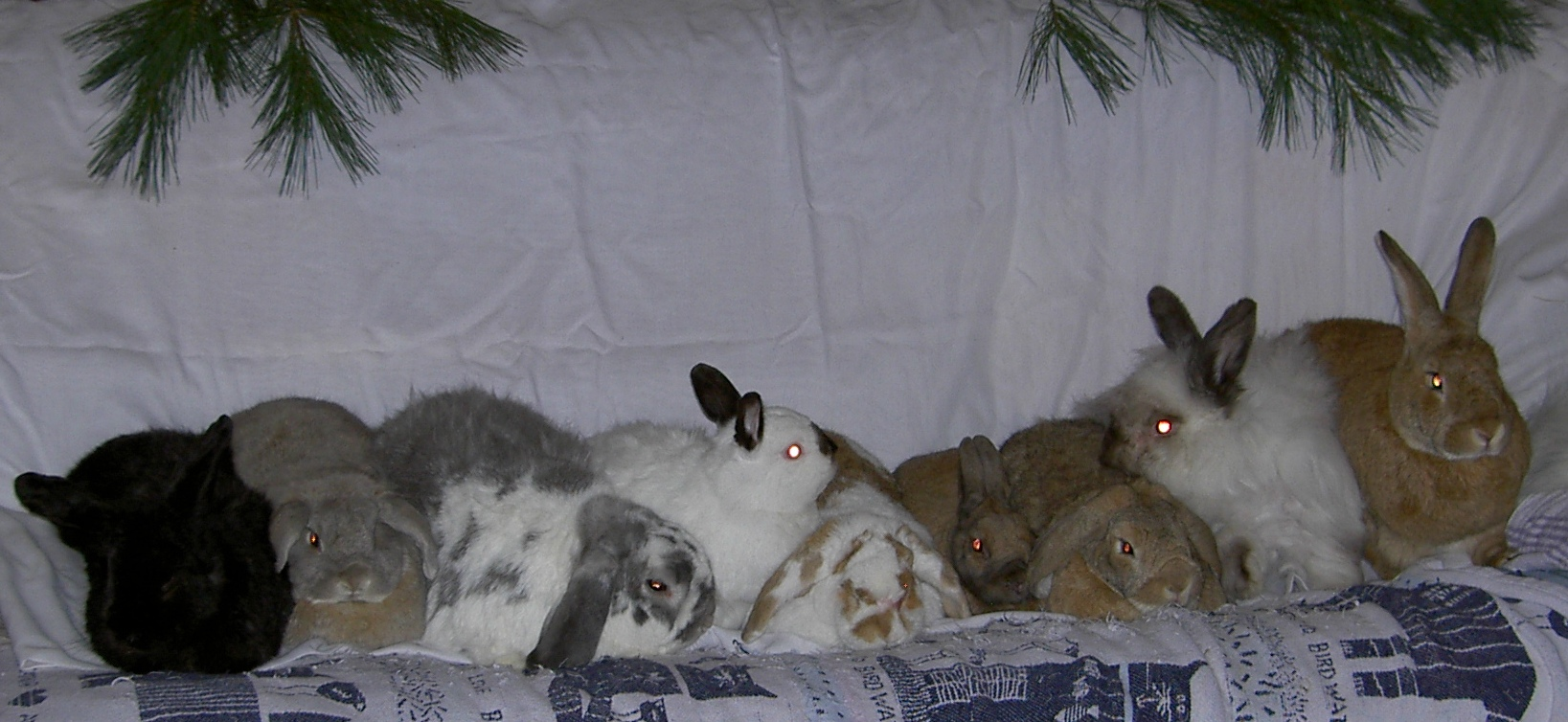 [ The bunnies, Yuletide 2005 ]