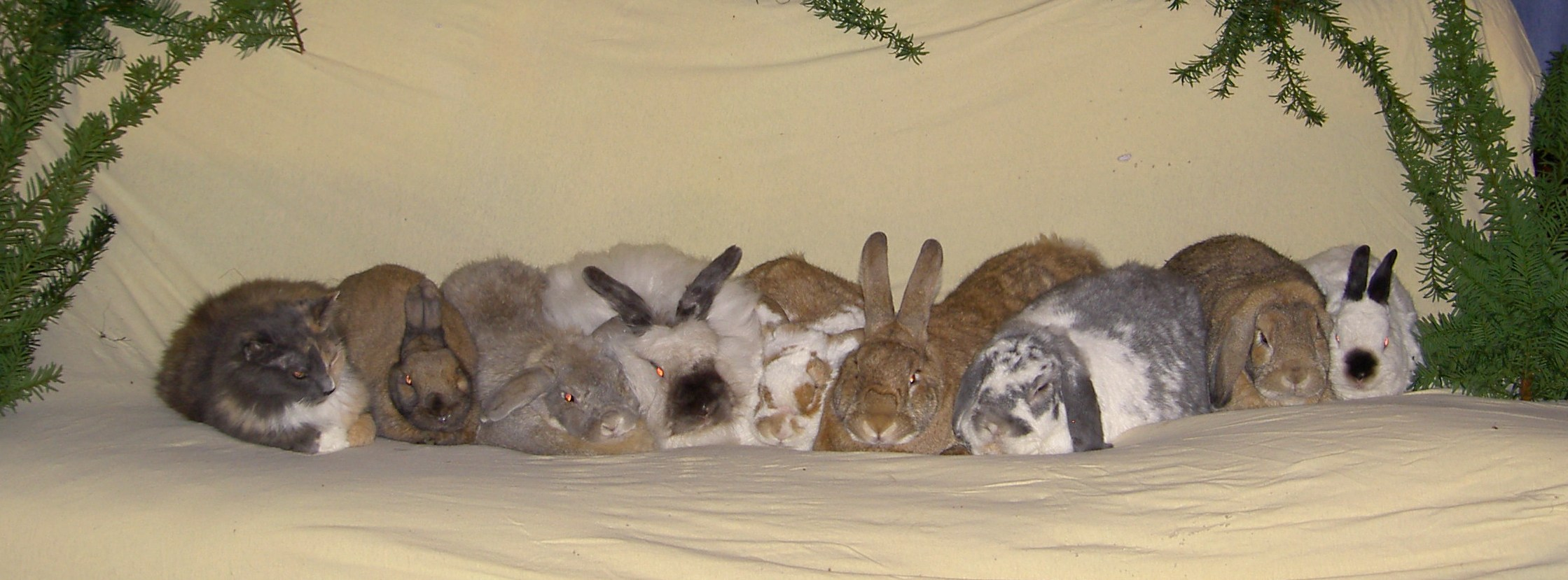 [ The bunnies, Yuletide 2006 ]
