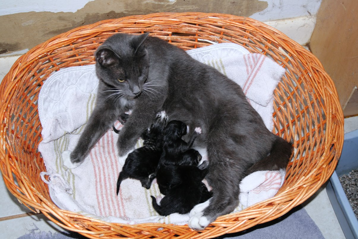 [ Michelle nursing her kittens ]