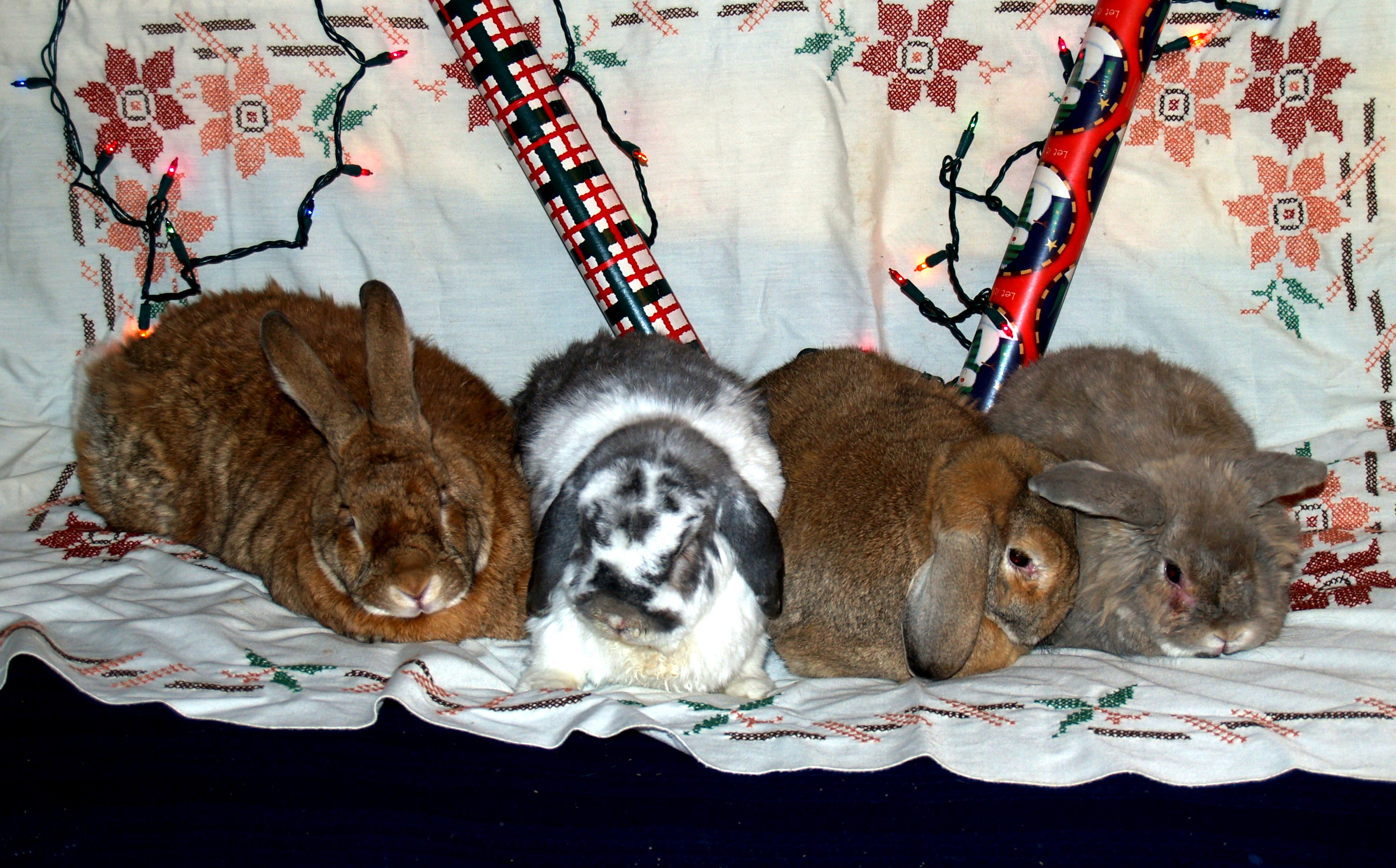 [ The bunnies, Yuletide 2007 ]